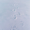 Footprints in the Snow,<br />                                                                                           an Advent Prayer<br />                                                                                           by Gary Yankech<br /> <br />                                                            Hope looks like....a mother's face staring into a newborn baby<br />                                                        Hope sounds like....a whisper of forgiveness to a friend at fault<br />                                                           Hope smells like...fragrant grass on an early spring morning<br />                                                               Hope taste like...fresh bread made from loving hands<br />                                                            Hope feels like...a warm blanket on a cold, blistery, winter day<br />                                                                  Jesus...help me to live a hopeful life as I celebrate Your coming