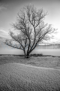 Frozen Tree B&W