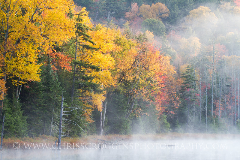 Mist over Fly Pond