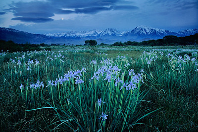 Iris at Night Eastern Sierra, California