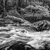 Little Pigeon River 1