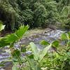 River Plantanario