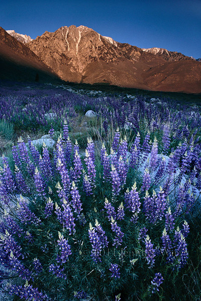 Harmony<br /> Eastern Sierra, California