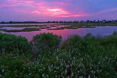 Sunrise over Lighthouse Pool - St Marks NWR, Florida