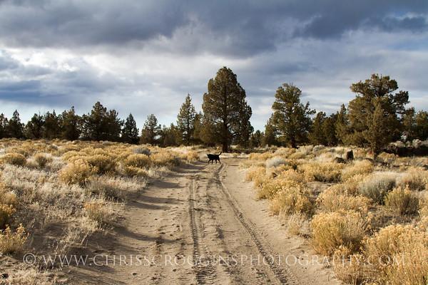 The Road Less Traveled.<br /> Oregon High Desert.