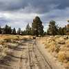 The Road Less Traveled.<br /> Oregon High Desert.