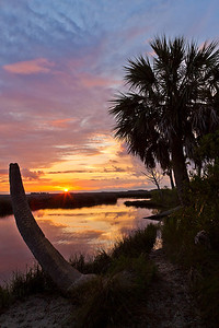 Sunrise and Palm Trunk - St. Marks NWR, Florida