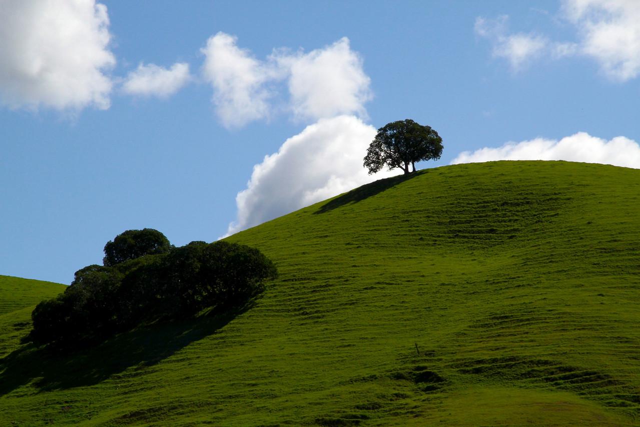 Shell  Ridge