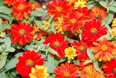2009 Botanical Garden 10-17-2009 4-11-39 PM