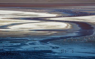20140212_Atacama_664  Altiplano of Bolivia with flamingos.