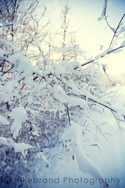 First Snow, 2010