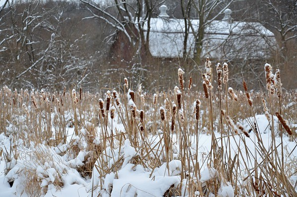 Snowy winter days at the wetlands