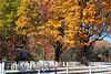 Fall scene pics 006