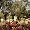 Sherwood Gardens 7
