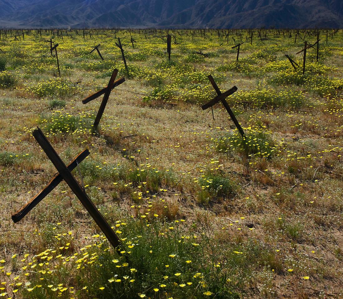 Death of a  Vineyard