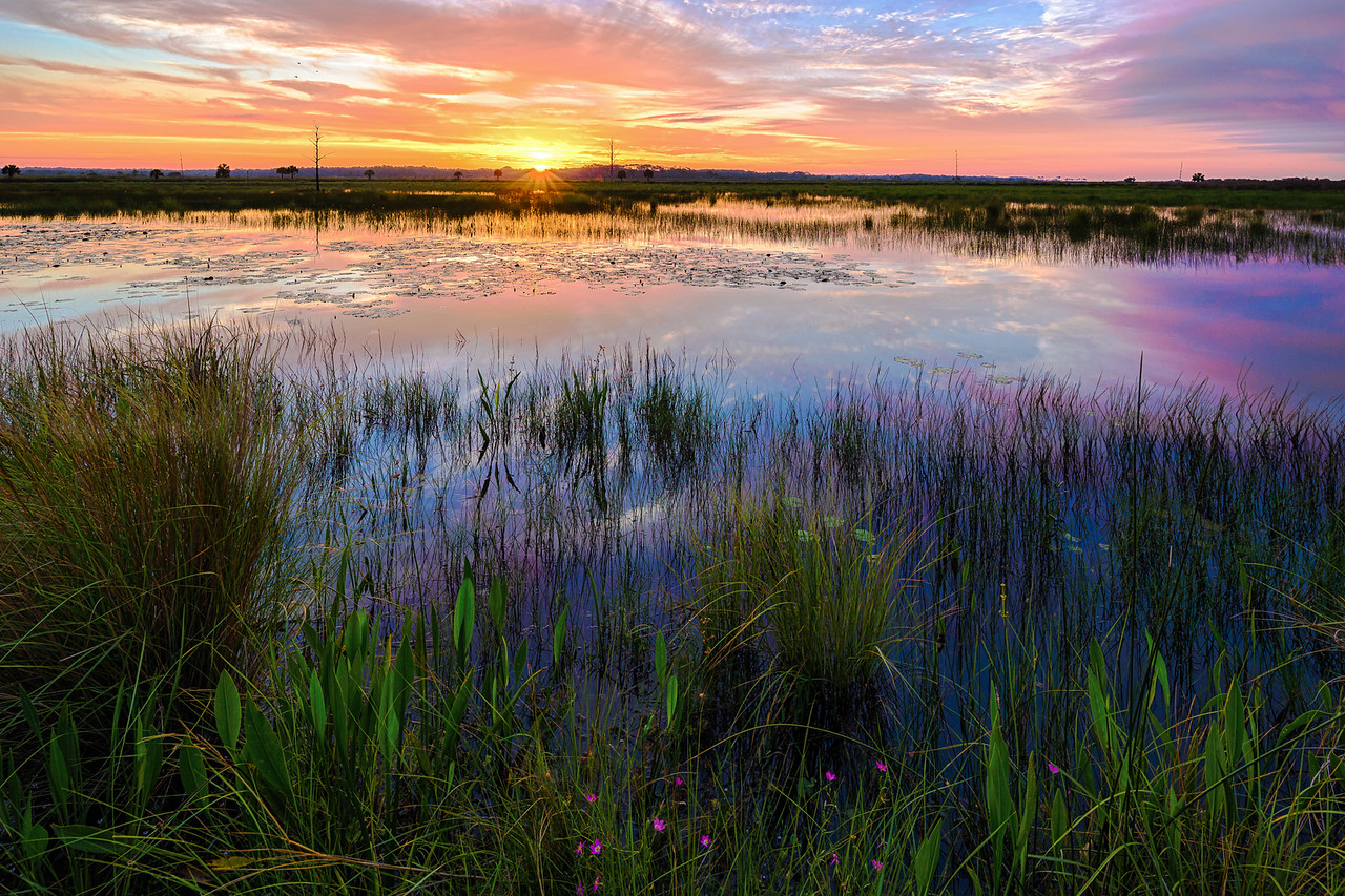 Colorful sunrise over the wetlands of St. Marks National Wildlife Refuge