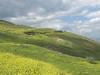 In the Gallilee
