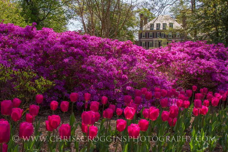 Sherwood Gardens 5