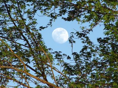 Peeking Moon