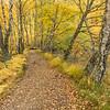 Craigellachie Birch Woods - Cairngorms