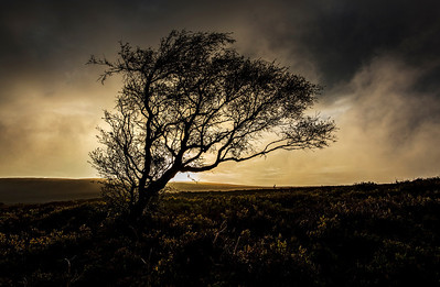 Sunrise on Exmoor.