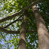 Tree Hugger.<br /> Gunpowder Falls State Park.<br /> Baltimore County, Maryland.