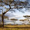 Africa Acacia Trees