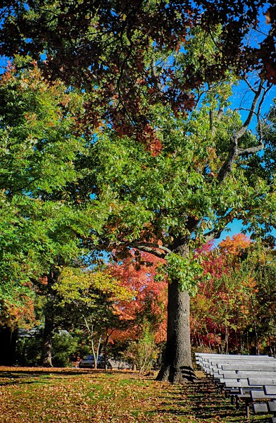 2014 Fall Foliage-3