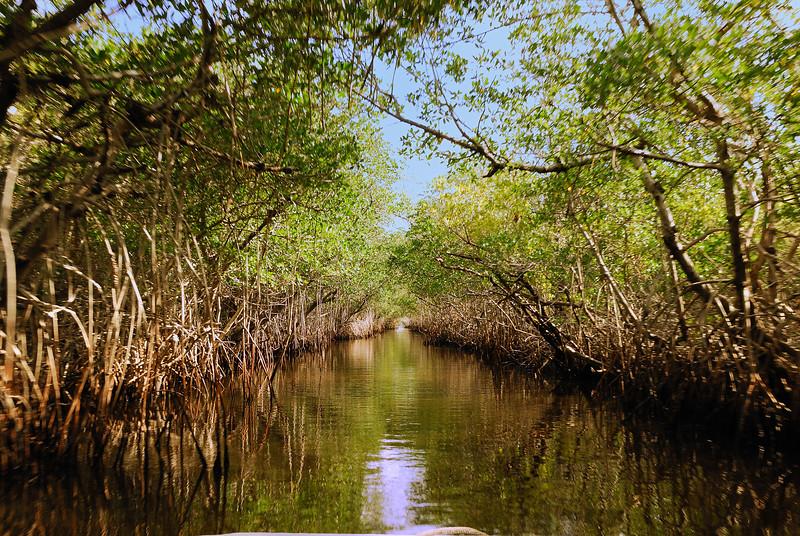 DSC_4280 Everglades 2009 RS