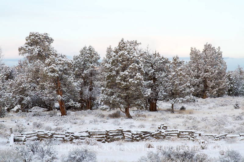 Spring Snowfall, Eastern Oregon