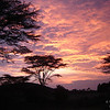 African Sky, Massai Mara, Kenya<br /> <br /> An Elephant Sunset<br /> by Gary Yankech<br /> <br /> Pink, can he see the pink night sky? <br /> The red velvet clouds,<br /> A silent painting<br /> that speaks aloud.<br /> <br /> The stars will come out <br /> Shining bright for him,<br /> Does he know they will be his guide <br /> As the light becomes thin?<br /> <br /> Then, what will tomorrow bring?<br /> Wet rains, green grass<br /> Or scorched earth, <br /> And dusty paths.<br /> <br />  Pink, can he see the pink night sky?