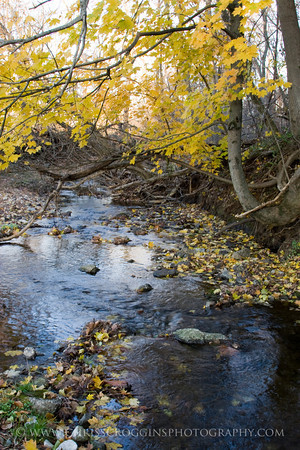 Oregon Branch Stream
