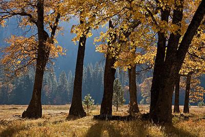 20071028_Yosemite021