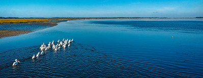 White Pelicans Pano Copyright 2020 Steve Leimberg UnSeenImages Com _0009