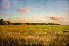 Marsh Mellow - Copyright 2018 Steve Leimberg UnSeenImages Com L1000767