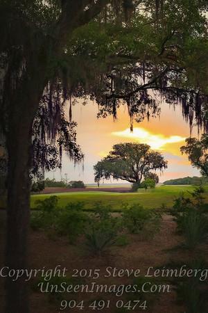Tree at Omni at Sunset - Copyright 2016 Steve Leimberg - UnSeenImages Com L1020216
