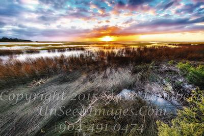 Marsh after the Oct 2016 Hurricane - Copyright 2016 Steve Leimberg - UnSeenImages Com _Z2A9994