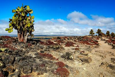 Galapagos Cacti Copyright 2020 Steve Leimberg UnSeenImages Com _DSC6265