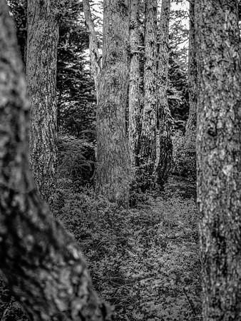 Through the Trees Copyright 2021 Stevve Leimberg UnSeenImages Com _DSF5371 copy