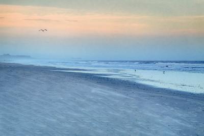 Gull Above Beach Copyright 2021 Steve Leimberg UnSeenImages Com L1000191 copy
