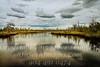 White Oak - Copyright 2017 Steve Leimberg - UnSeenImages Com L1190923