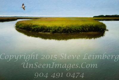 Marsh - Copyright 2015 Steve Leimberg - UnSeenImages Com L1000688