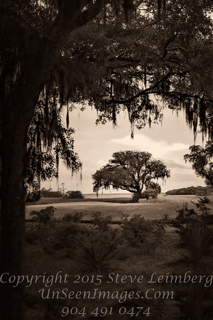 Tree at Omni at Sunset - B&W Copyright 2016 Steve Leimberg - UnSeenImages Com L1020216