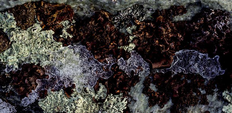 Lichen and Ice