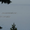 Oyster beds in Puget Sound