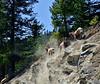 SBHRM-2015.5.19#994.3. Banff Nat. Park. Alberta Canada.