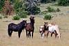 H-2018.7.7#2664. Wild Horse. Wyoming.