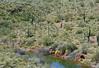 WB-2020.3.20#8016.2xx. A group of Wild Burro's working thier way through a canyon near Lake Pleasant Arizona.
