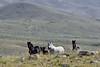 H-2018.7.7#2164. Wild Horse. Wyoming.