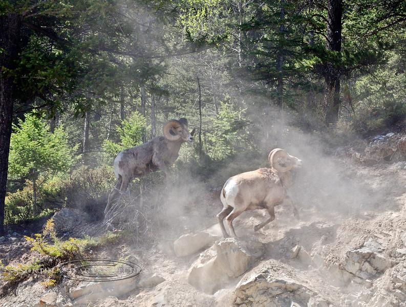 SBHRM-2015.5.19#1014.3. Banff Nat. Park. Alberta Canada.